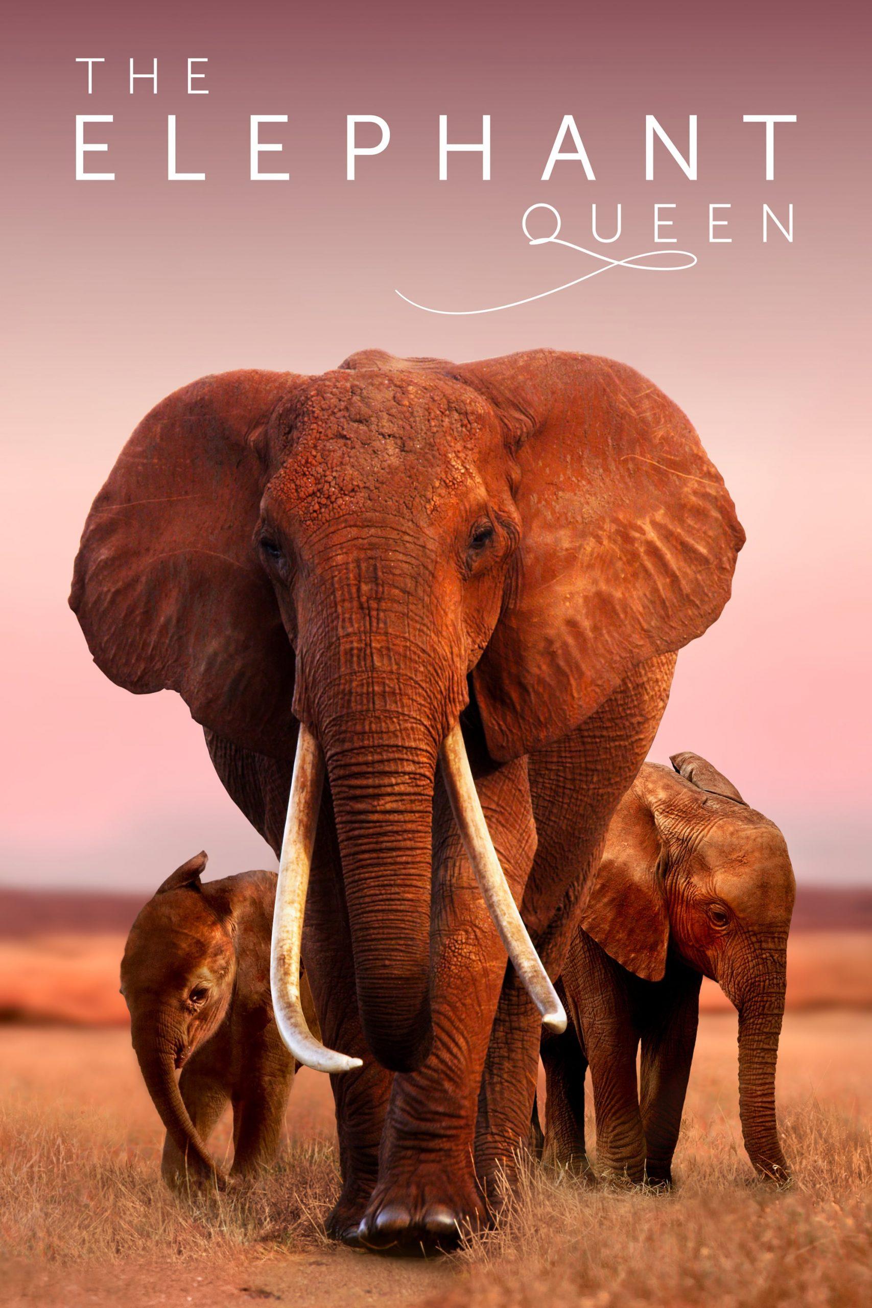دانلود فیلم The Elephant Queen 2019